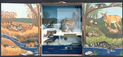 Cape Cod Museum exhibit box, rabbit