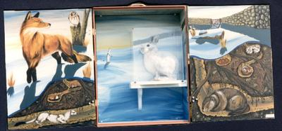 Cape Cod Museum exhibit box, snowshoe hare