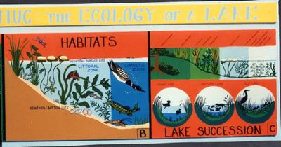 Ecosystem of Lake exhibit, detail 8
