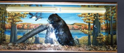 White Memorial Conservation Area Visitor Center display box